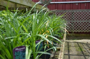 perenials,ground cover,& more (click to view more)