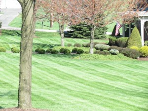 Landscaping/Mowing
